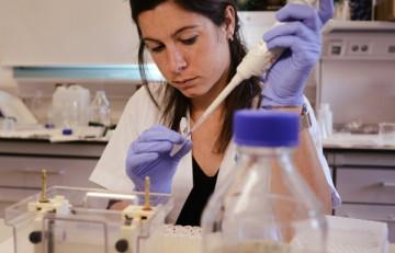 Circuitos celulares sintéticos encapsulados para restablecer el control glucémico en diabetes mellitus tipo 1 en ratones