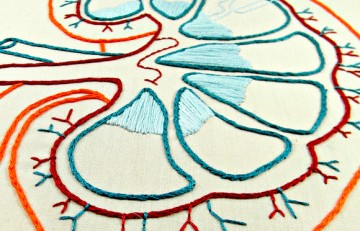 Riñón hecho con hilos - Hey Paul Studios - Flickr - CC BY 2.0